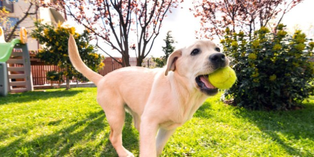 7 Reasons Dogs Make the Best Life Companions
