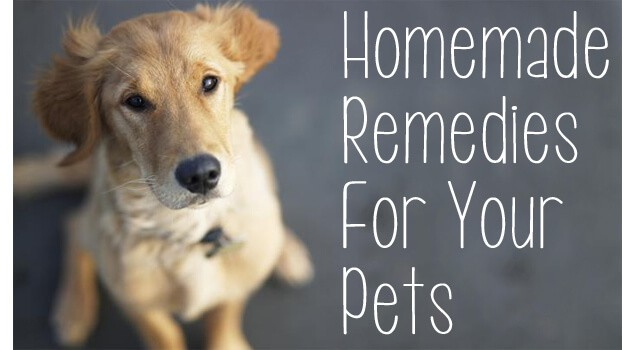 Homemade Remedies For Pets Using Essential Oils