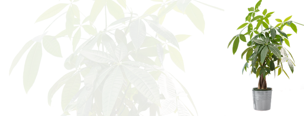 Top 5 Plants for Increasing Oxygen_4_4