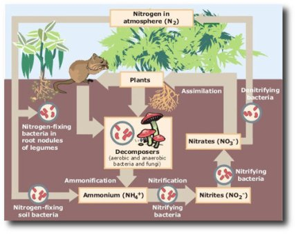 Why Is Biodiversity Important Who Cares_5